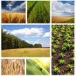 Fields collage — Stock Photo #5298171