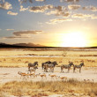 Постер, плакат: Safari in Namibia