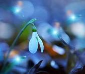 весна подснежники — Стоковое фото