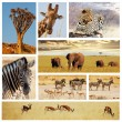 Stock Photo: Safari collage