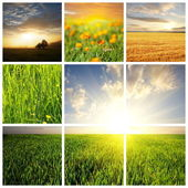 Field collage — Stock Photo