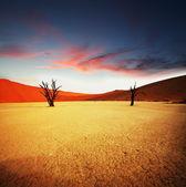 纳米布,在纳米比亚死亡谷 — 图库照片