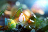 Spring flowers — Stok fotoğraf