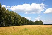 Summer grassland — Stock Photo