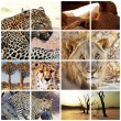 Wild cats collection — Stockfoto