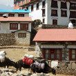 Namche Bazaar — Stock Photo #5366634