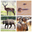 Stock Photo: Safari collection
