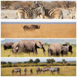 Stock Photo: Wild animals on Safari