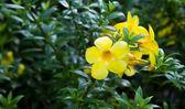 Gelbe blüte — Stockfoto