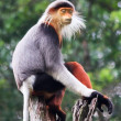 Stock Photo: Meditating Monkey