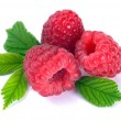 Raspberry with leaves — Stock Photo