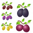 Plum and leaves - Stock Vector