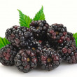 Dewberries (blackberries) — Stock Photo