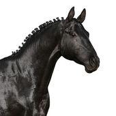Black horse head — Stock Photo