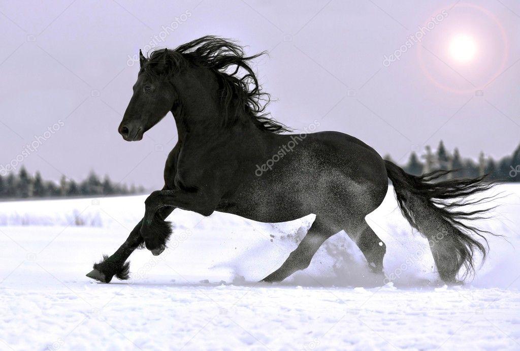 на обои лошади
