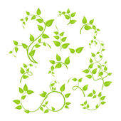 Green branches — Vector de stock
