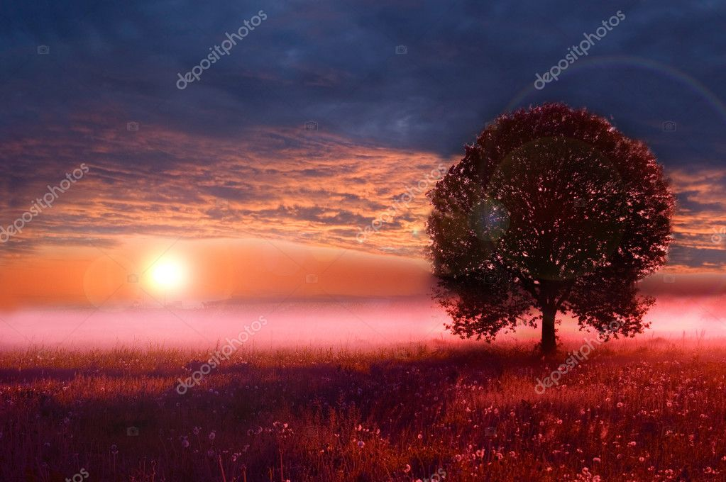Beautiful sunrise on the field. — Stock Photo #5197208