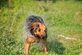Arka plan bulanık köpek — Stok fotoğraf