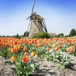 Windmill and tulips — Stock Photo #4879191