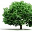 3d tree render on white background — Stock Photo #5251527