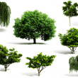 3d tree pack - render on white background — Stock Photo #5251528
