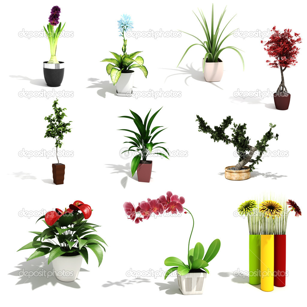 3d pack of beautiful home plants stock photo digitalgenetics 5286916 - Beautiful house plants ...