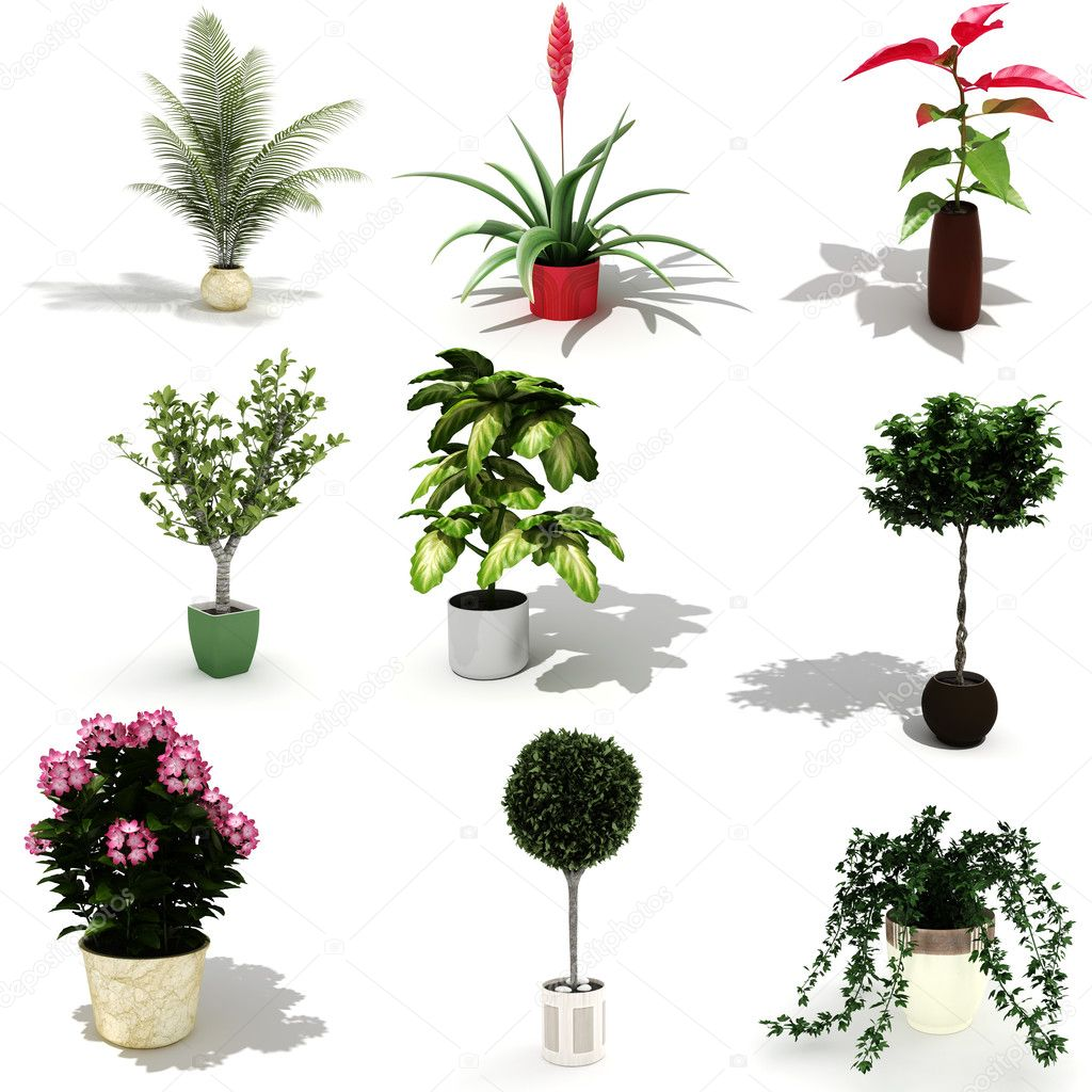 3d pack of beautiful home plants stock photo Beautiful plants for home