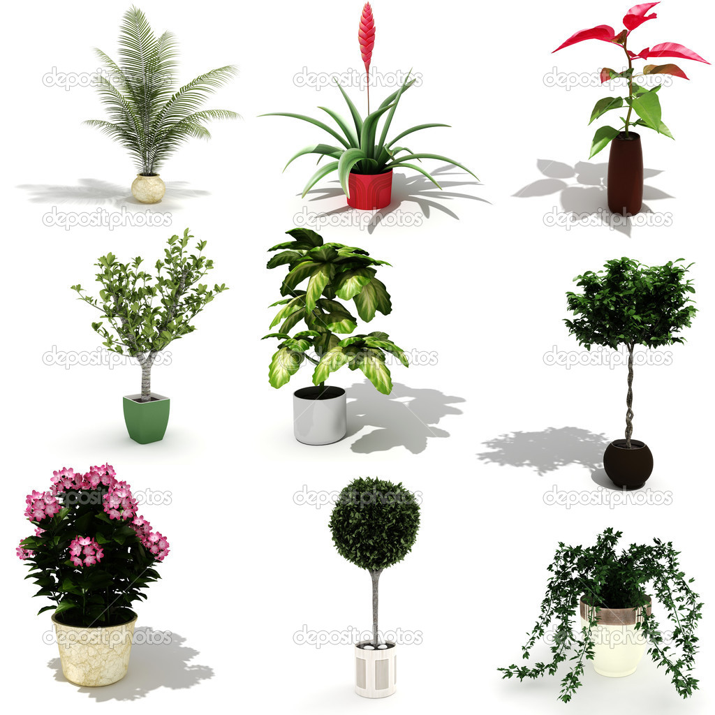 3d Pack Of Beautiful Home Plants Stock Photo