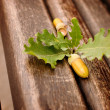 Oak acorn and leaves - Stock Photo