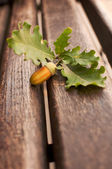Oak acorn and leaves — Stock Photo
