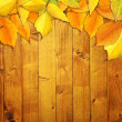 Autumn leaves — Stock Photo #4189597