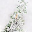 Frost on pine — Stock Photo