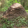 Big ant hill in the woods - Stock Photo