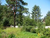 Cottage in the country. Summer. Karelian isthmus — Stock Photo