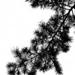 Silhouette of pine tree branch — Stock Photo