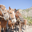 Brown horses on ranch — Stock Photo #3931096