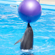 Dancing dolphin — Stock Photo #4060064