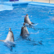 Stock Photo: Dancing dolphins