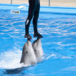 Dolphinarium show - Stock Photo