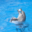 Dancing dolphin - Stock Photo