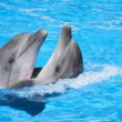 Stock Photo: Two dancing dolphins