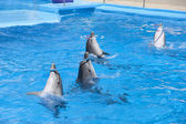 Dancing dolphins — Stock Photo