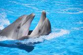 Dos delfines bailando — Foto de Stock