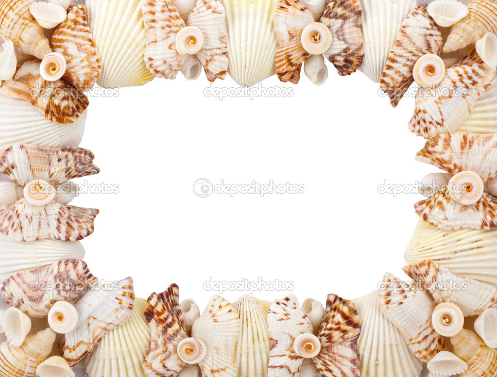 可爱的照片边框贝壳