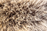 Animal fur — Stock Photo