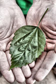 Green leaf in hands — Stock Photo