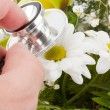 Hand examining flower by stethoscope — Stock Photo #5346718