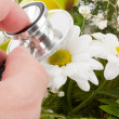 Hand examining flower by stethoscope — Stock Photo