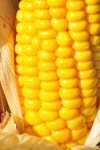 Filamento de maíz visto cerrar — Foto de Stock