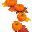 Orange pumpkins lined up in a semicircle — Stock Photo